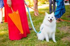 Vit hund som gifta sig Ring Bearer Royaltyfria Bilder