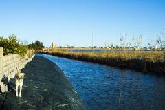 Vit hundattackställing på det vänstert med den Albufera kanalen i Valencia royaltyfri bild