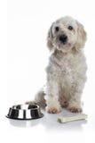 Vit hungrig hund arkivfoto