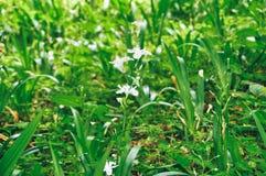 Vit irisblomma i sommar royaltyfri fotografi