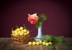 Vit körsbärsröd blomma i en keramisk vas Royaltyfri Foto
