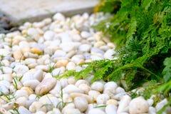 Vit kalksten vaggar, och grönt gräs, vit vaggar under gräsplan le Arkivbild
