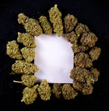 Vit kanfas som inramas av torkade cannabisknoppar Royaltyfri Bild