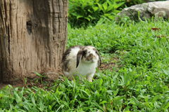 Vit kanin Arkivbilder