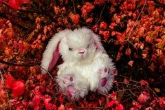 Vit kanin i den felika skogen Arkivfoto
