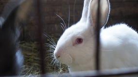 Vit kanin i en bur Slapp fokus royaltyfria foton