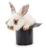 Vit kanin i en hatt royaltyfri fotografi