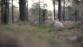Vit kanin i en sommarskog stock video