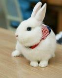 Vit kanin med den lilla halsduken Arkivfoto