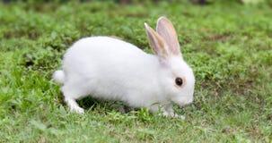 Vit kanin på grönt gräs Royaltyfri Foto