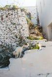 Vit katt av Kythnos arkivfoto