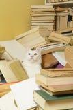 Vit katt bland en grupp av böcker Selektivt fokusera Arkivbild