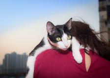 Vit katt för ung asiatisk kvinnahållsvart i händer Arkivbild