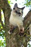 Vit katt i appletreen Royaltyfri Fotografi