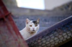 Vit katt i en gata i Catalonia, Spanien Royaltyfri Foto