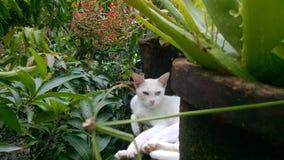Vit katt i en trädgård Fotografering för Bildbyråer