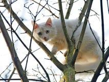 Vit katt i ett träd Arkivbild
