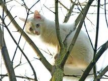 Vit katt i ett träd Royaltyfria Bilder