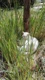 Vit katt i gräs Royaltyfria Bilder