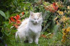 Vit katt i gräsplanen med blommor fotografering för bildbyråer