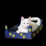 Vit katt i lite träspjällåda Fotografering för Bildbyråer