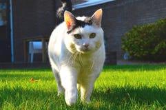 Vit katt i närbild Arkivfoton