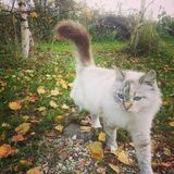 Vit katt i skog Arkivbilder