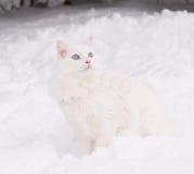 Vit katt i snön Royaltyfri Bild