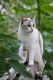 Vit katt i trädgård Royaltyfri Bild