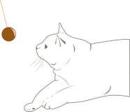 Vit katt med en toy Royaltyfri Fotografi