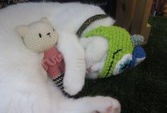 Vit katt med hennes docka Arkivfoto