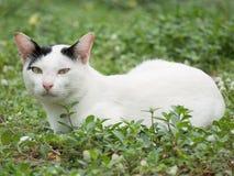 Vit katt med små svarta fläckar på dess Earr royaltyfria foton