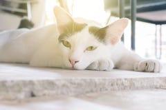 Vit katt med tillbaka fläckar som ligger på cementgolvet med solljusbakgrunden arkivbild
