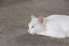 Vit katt på det grova cementgolvet Royaltyfria Foton