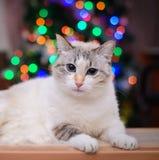 Vit katt på en bakgrund av kulöra ljus Arkivfoto