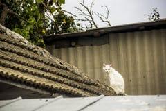 Vit katt på ett tak royaltyfria bilder
