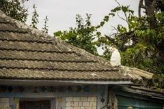Vit katt på ett tak royaltyfri fotografi