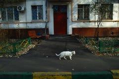 Vit katt på gatan Royaltyfri Bild