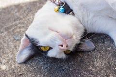Vit katt på jordningen Arkivfoton
