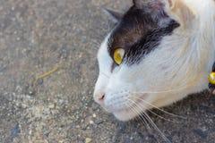 Vit katt på jordningen Royaltyfria Foton