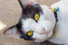 Vit katt på jordningen Arkivbild
