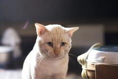 vit katt se dig arkivfoton