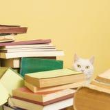 Vit katt som kikar bak en hög av böcker Selektivt fokusera Arkivbilder