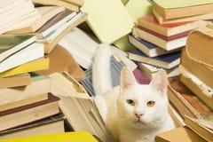 Vit katt som ligger i en grupp av böcker Selektivt fokusera Arkivfoto