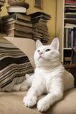 Vit katt som ligger i fåtöljen Royaltyfri Bild