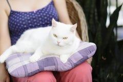 Vit katt som ligger på kudden Selektivt fokusera Royaltyfri Foto