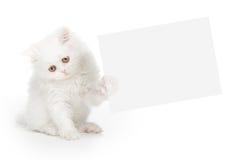 Vit katt som rymmer ett kort Royaltyfri Foto