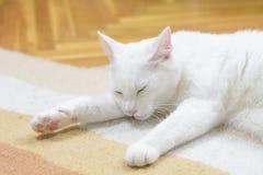 Vit katt som sover på mattan Royaltyfri Foto