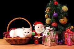 Vit katt som spelar med en Santa Claus Arkivbild