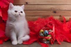Vit kattunge Royaltyfri Fotografi